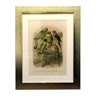 Beaten Gold Coloured Framed Bird Print - Parakeets