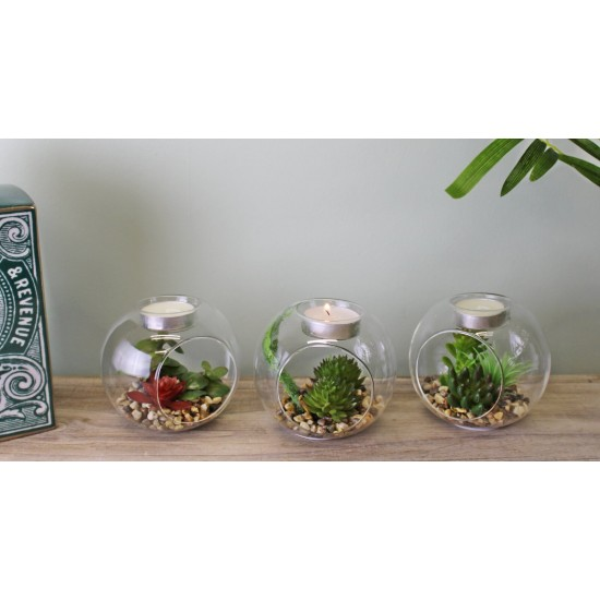 Succulent In Glass Terrarium with TeaLight Holder