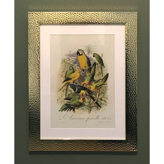 Beaten Gold Coloured Framed Bird Print - Parrots